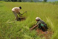 Fields India
