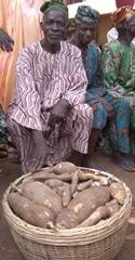 Selling Cassava Nigeria