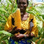 New Study Finds that Orange Maize Improves Vitamin A in Children