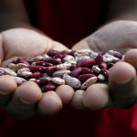 Call for authors: WHO-led biofortification research