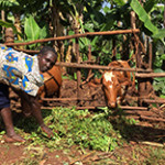 Improving nutrition in Kenya through farm and landscape modelling