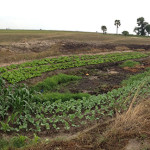 Understanding diverse landscapes and improved nutrition in Zambia