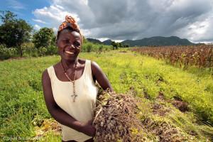 Woman farmer harvesting groundnuts in Zimbabwe. (Flickr: David Brazier/IWMI)