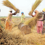Women farmers threshing rice in Punjab, India. Source: Flickr (Neil Palmer/CIAT)