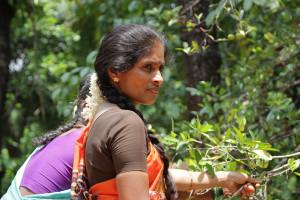 Women during fruit harvest in India. (Photo credit: Bioversity International/E.Hermanowicz