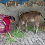 Join livestock and household nutrition learning webinar
