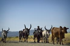 Webinar: Addressing Food Safety in Animal Source Foods for Improved Nutrition