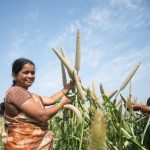 New Review Affirms Nutritional Impact of Iron-Biofortified Crops