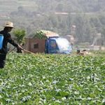 Workshop: Better Targeting Food Safety Investments in Low and Middle Income Countries