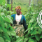 HarvestPlus Named Finalist in MacArthur Foundation Competition for $100 Million Grant