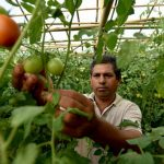 Making the Case for Dual Nutrition and Climate Adaptation Goals