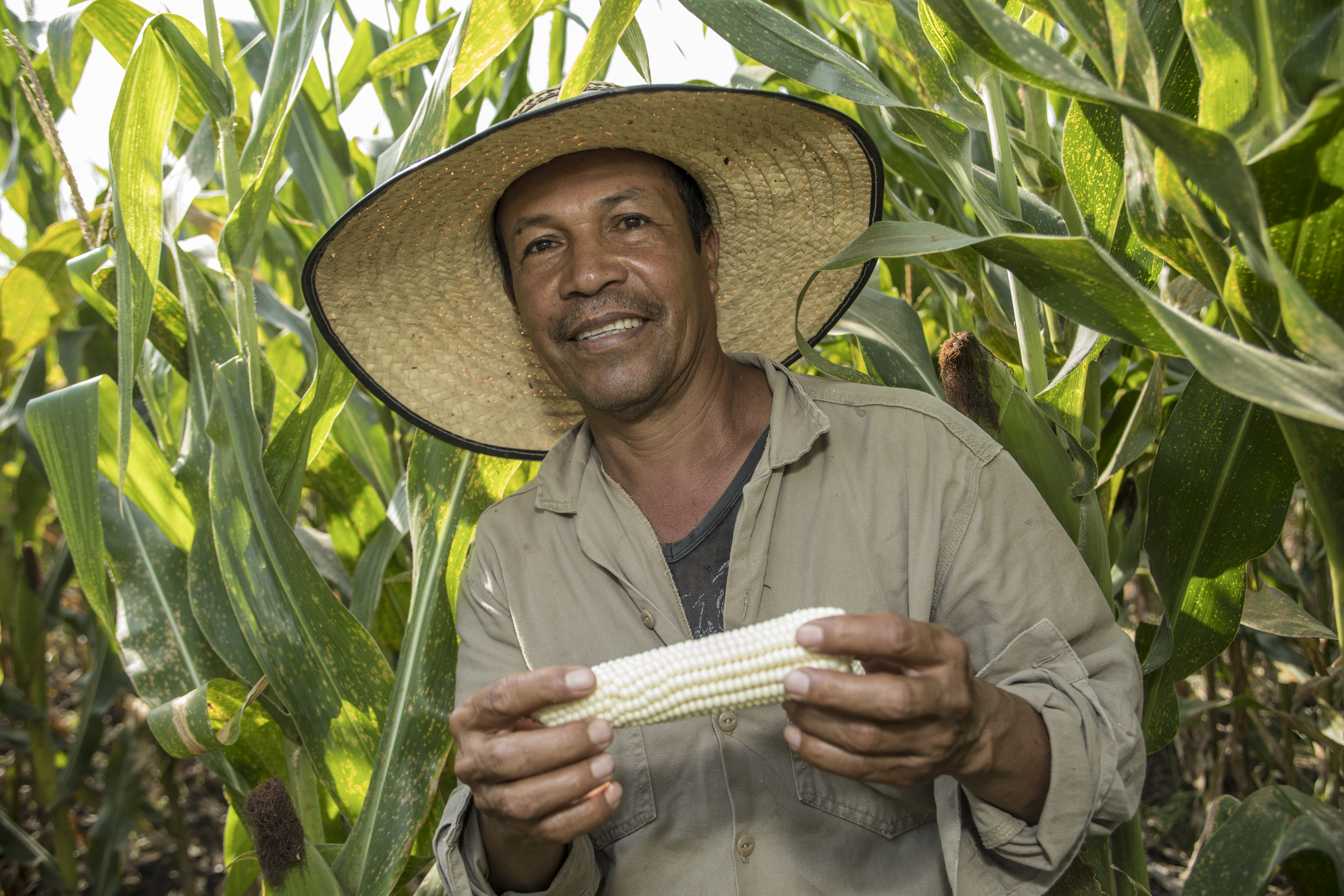 HarvestPlus Welcomes New UK Commitment to Support Biofortification