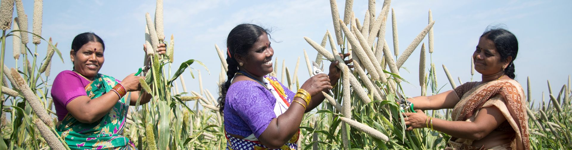 Biofortified Staples May Hold the Key to India's Rural Malnutrition