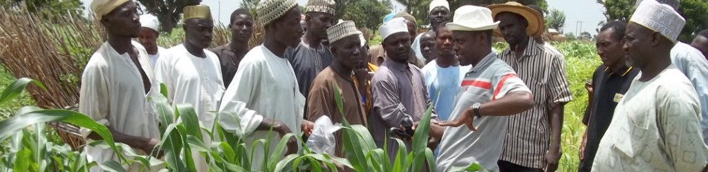Voices from the Field: Fighting Aflatoxin in Nigeria