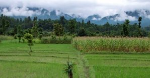 Contribution of Forests, Trees and Agroforestry to Sustainable Food Security and Nutrition in a Time of Crisis